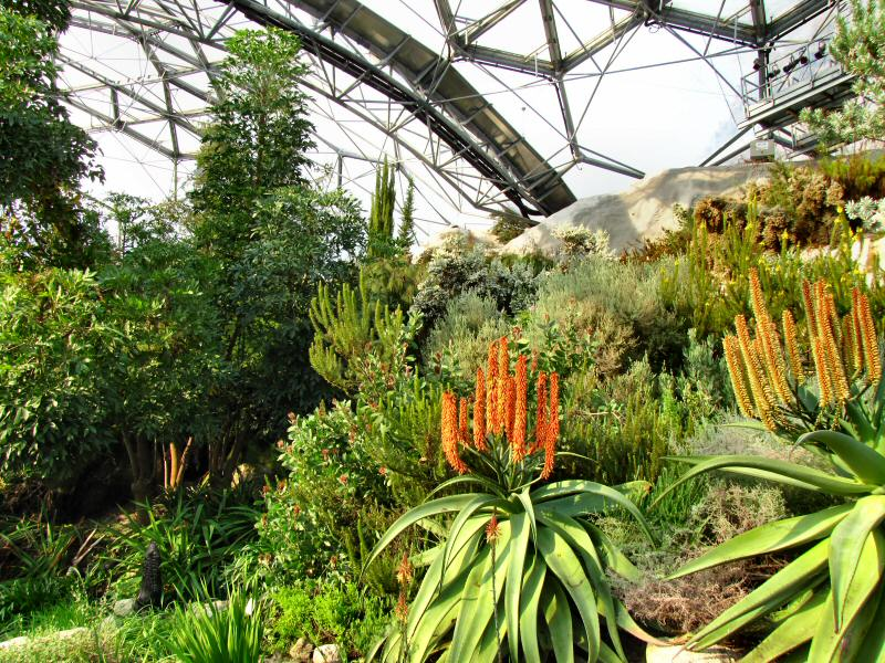 Mediterranean Biome indoor garden - Eden Project, Cornwall